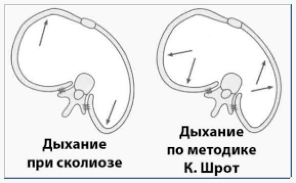 дыхание по методике К. Шрот